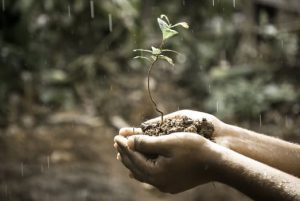plante-i-haand-med-regn